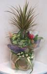 2008.8.6移転祝いの観葉植物.JPG